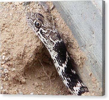 Snake Head Canvas Print by Desert Harmony