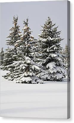 Snow Covered Evergreen Trees Calgary Canvas Print by Michael Interisano