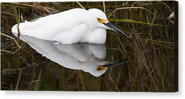Snow Egret Reflection Canvas Print by Andres Leon