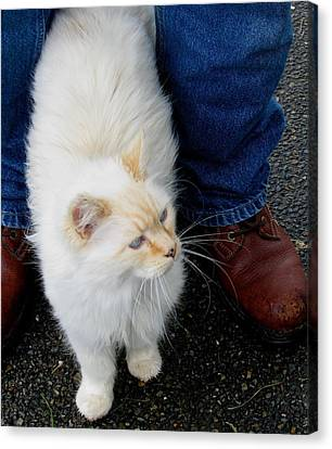 Snowbell Making Friends Canvas Print by Rory Sagner