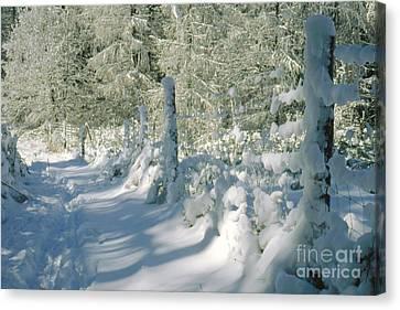 Snowy Footpath In Winter Wonderland Canvas Print by Heiko Koehrer-Wagner