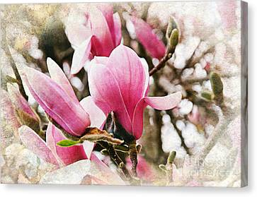 Snowy Magnoila Mist  Canvas Print by Andee Design