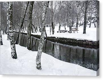 Snowy Park Canvas Print by Carlos Caetano