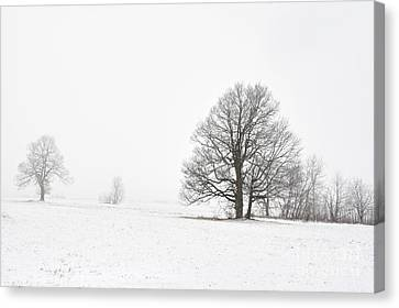 Snowy Winter Landscape With Trees Canvas Print by Michal Boubin