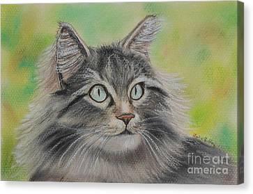 Soft Kitty Canvas Print by Julie Brugh Riffey