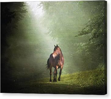 Solitary Horse Canvas Print by Christiana Stawski