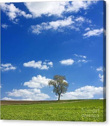 Solitary Tree In Green Meadow Canvas Print by Bernard Jaubert