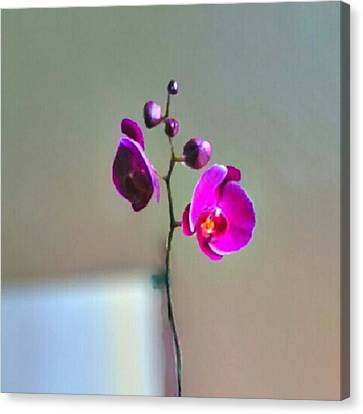 Some #flowers That Were Sent To My Wife Canvas Print by Kel Hill