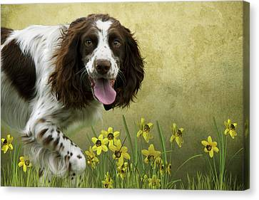 Spaniel With Daffodils Canvas Print by Ethiriel  Photography