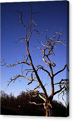 Spooky Tree Canvas Print by Larry Ricker