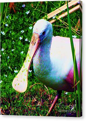 Spoonbill Number One Canvas Print by Doris Wood