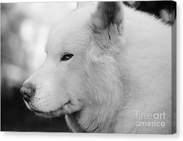 Spot In Black And White Canvas Print by Lynda Dawson-Youngclaus