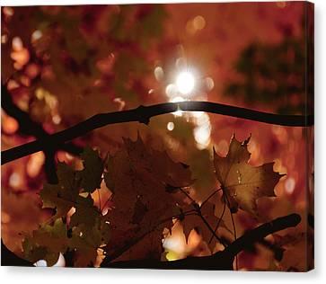Spotlight On Fall Canvas Print by Cheryl Baxter