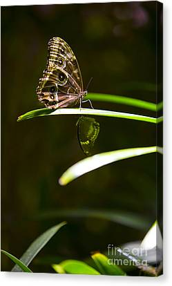 Spotted Beauty Canvas Print by Leslie Leda