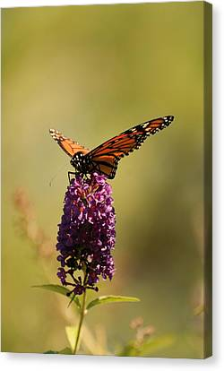Spread Your Wings And Fly Canvas Print by Angie Tirado