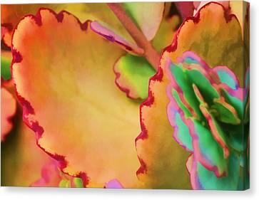 Spring 2 Canvas Print by Dawn Nicoli