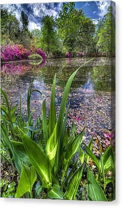 Spring At Magnolia Plantation - Charleston Sc Canvas Print by Drew Castelhano