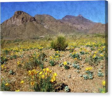 Spring Bloom Franklin Mountains Canvas Print by Kurt Van Wagner