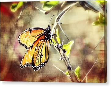Spring Butterflies  Canvas Print by Saija  Lehtonen