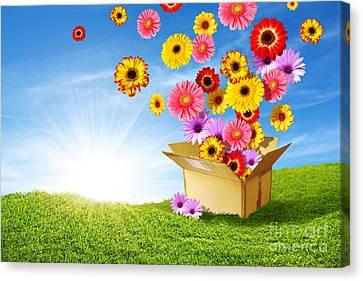 Spring Delivery Canvas Print by Carlos Caetano