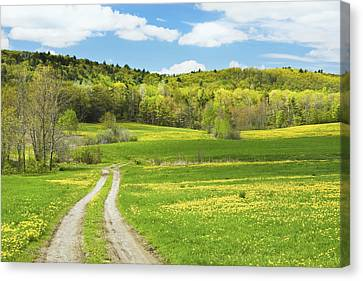 Spring Farm Landscape With Dirt Road In Maine Canvas Print by Keith Webber Jr