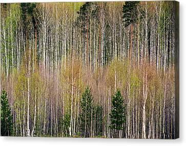 Spring Forest Lace Canvas Print by Vladimir Kholostykh