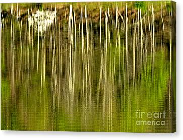 Spring Morning Reflections Canvas Print by Thomas R Fletcher