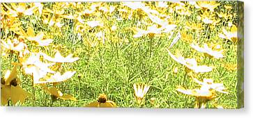 Spring Canvas Print by Rachel Snell