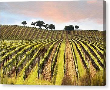 Spring Vineyard Canvas Print by Sharon Foster