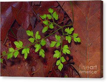 Spring Will Come Canvas Print by Judi Bagwell
