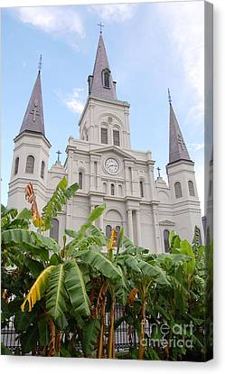 St Louis Cathedral Rising Above Palms Jackson Square French Quarter New Orleans Print  Canvas Print by Shawn O'Brien