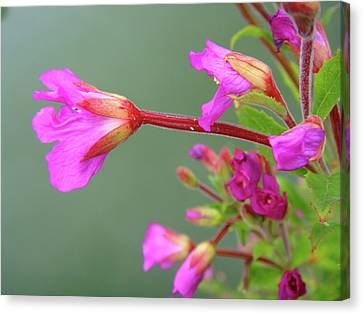 Flowers Canvas Print featuring the photograph Standing Out by Roberto Alamino
