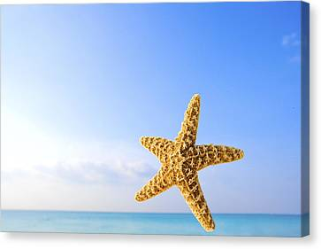 Starfish In Front Of The Ocean Canvas Print by Richard Wear