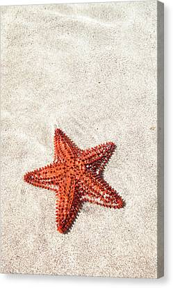 Starfish Under Water Canvas Print by Matteo Colombo