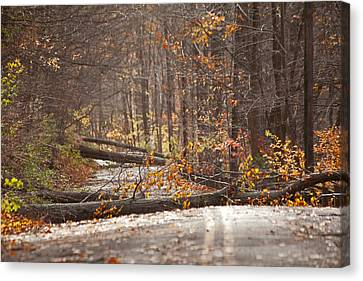 Stormy Autumn Canvas Print by Karol Livote