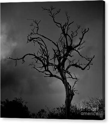 Stormy Tree Canvas Print by Kevin Barske