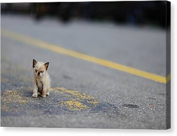 Street Kitten On Road Canvas Print by Carlina Teteris