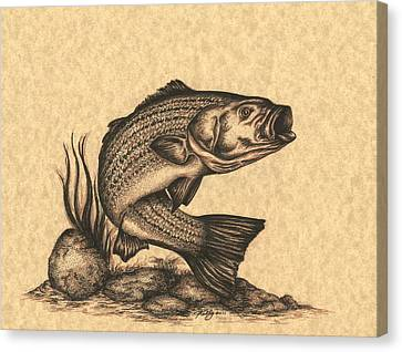 Striped Bass Canvas Print by Kathleen Kelly Thompson