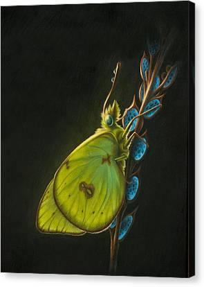 Sulpher Canvas Print by Shawn Kawa