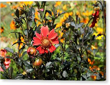Summer Blossom Canvas Print by Theresa Willingham