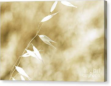 Summer Grass Canvas Print by Artist and Photographer Laura Wrede