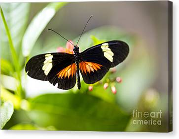 Summer Love Canvas Print by Leslie Leda