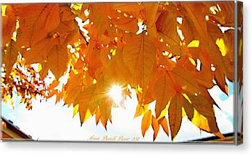 Sun Kissed  Deciduous Canvas Print by Danielle  Parent