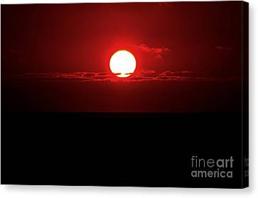 Sun Canvas Print by Pravine Chester