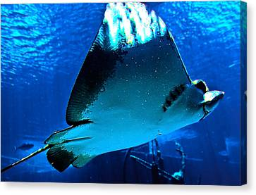 Sun Rays On A Stingray Canvas Print by DigiArt Diaries by Vicky B Fuller