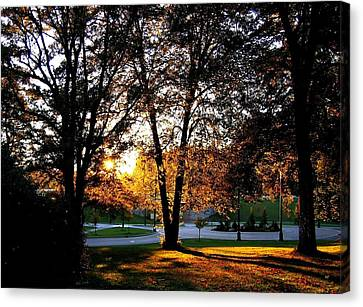 Sundown In Stanley Park Canvas Print by Will Borden