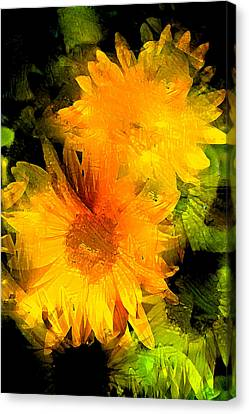 Sunflower 2 Canvas Print by Pamela Cooper