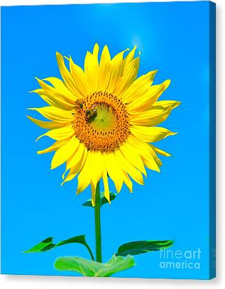 Sunflower And Bee Canvas Print by Debbi Granruth