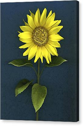 Sunflower Canvas Print by Deddeda