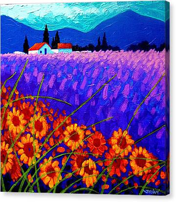 Sunflower Vista Canvas Print by John  Nolan
